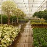 Vendita diretta di piante, arbusti, fiori, erba in zolle