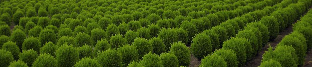 Vendita arbusti e piante anche ad alto fusto