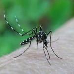 La pianta respingi zanzare