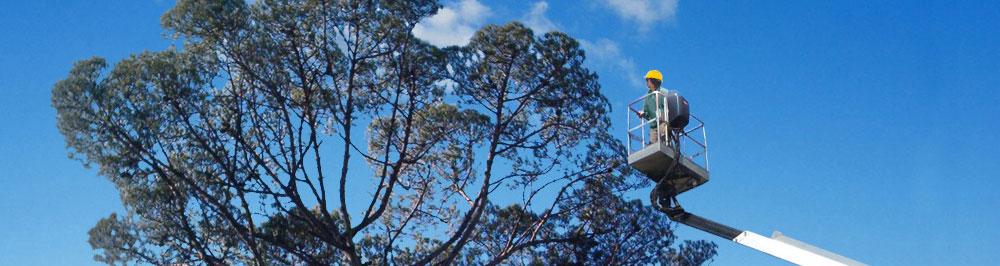 Potatura piante ad alto fusto fino a 26 metri di altezza